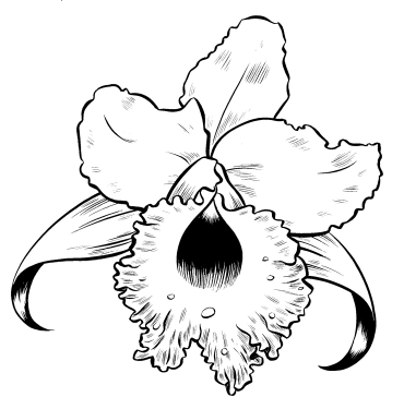 """Orchid"" is copyright ©2008 by Colleen Coover.  All rights reserved.  Reproduction prohibited."